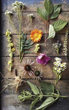 List of healing plants.