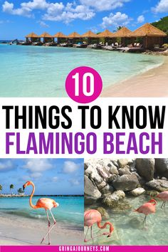 Learn 10 things to know about Flamingo Beach in Aruba before your visit. For example, did you know that there's only one beach in Aruba with flamingos? Discover how to plan a day trip to Flamingo Island, including price, how to secure a day pass to the Renaissance Aruba Private Island, and more. | flamingo beach aruba | flamingo island aruba | renaissance island aruba day pass | flamingo beach aruba day pass Travel Advice, Travel Ideas, Travel Guide, Travel Inspiration, Backpacking South America, South America Travel, Flamingo Beach Aruba, Amazing Places, Beautiful Places