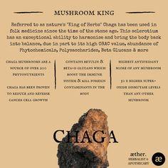 Chaga Benefits, mushrooms, herbal medicine, apothecary Healing Herbs, Medicinal Plants, Natural Healing, Magic Herbs, Herbal Magic, Natural Medicine, Herbal Medicine, Mushroom Cultivation, Herbs For Health