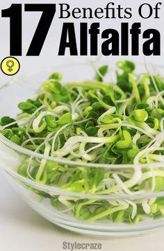 17 Amazing Benefits Of Alfalfa For Skin, Hair And Health #nutribullet