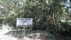 https://flic.kr/p/Gt4uhz   23.4.16 Parque Estadual da Serra do Mar (20)