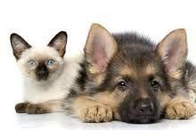 Frisse huisdieren – Vieze luchtjes aan je hond of kat? Borstel hun vacht met baking soda.