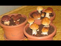 Как вырастить много белых грибов на своем участке (размножаем корнями) - YouTube