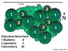 Polyculture Design-berry patch