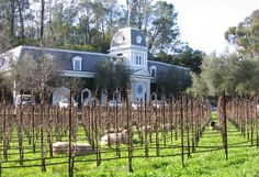 Spring Mountain Winery - Sustainable sheep! - Napa - all year round guide to wine country  -   Winerist