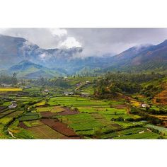 Mystical Munnar  #munnar #kerala #india #landscape #plantation #photography #clouds #green #monsoon