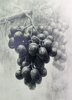 grape pencil drawing - Google ძებნა