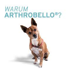 Bei Problemen mit dem Bewegungsapparat Ihres Hundes unterstützt Arthrobello® auf sanfte Weise und leistet einen wertvollen Beitrag zur Regeneration. Corgi, Animals, Pet Dogs, Corgis, Animales, Animaux, Animal, Animais