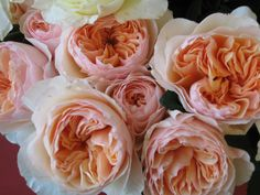I love the David Austen roses because they are cream, but have that touch of peachy-coral that will tie in your colors