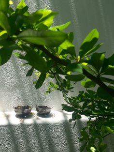 Puse las semillas en recipientes de vidrio, de mi cocina, y las puse en la bardita de mi jardín donde les llega perfecto el sol, así podrán germinar perfectamente. Carla Balleza 28 de abril
