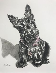 FINLEY#evelinadillon #memphisartist #charcoal #drawing #dog