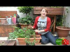 ▶ El huerto en casa 26 hierbas aromaticas - YouTube