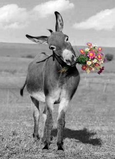flowers for bold donkey's coy girlfriend