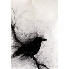 Blackbird on a branch - original charcoal drawing, abstract crow 6x9,5 inch ($65) found on Polyvore