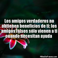 Los amigos verdaderos no obtienen beneficios de ti; los amigos falsos sólo vienen a ti cuando necesitan ayuda