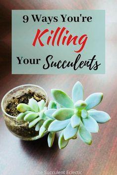 Propagating Succulents, Succulent Gardening, Succulent Care, Succulent Terrarium, Succulents Garden, Planting Flowers, Succulent Landscaping, Terrariums, Watering Succulents