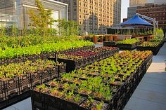 "woseph: "" portable farm -> milk crates (they moved the entire farm inside during Hurricane Irene!) Riverpark Farms NYC "" that is intense, the whole farm!"