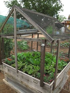 Garden ~ Pest Free!  This is so fantastic!  I have the chicken wire, the pallets, the seeds ... now, I just need to spring this on my husband.