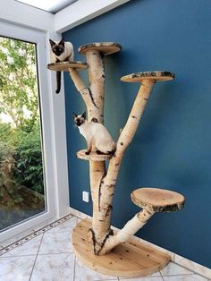Outdoor cat tree can be a lovely and pleasing addition to your cat's life! Try these 15 best DIY outdoor cat tree ideas & plans to build your own cat tree. Animal Room, Outdoor Cat Tree, Diy Cat Tree, Best Cat Tree, Cool Cat Trees, Cat Run, Cat Playground, Playground Design, Cat Towers