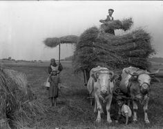 Vintage photo of the Czech countryside.