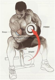 The top 10best exercises for biceps