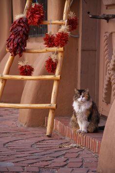 Senor don Gato - Albuquerque Old Town   Flickr - Photo Sharing!