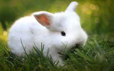 Ultra HD cute white bunny 1920×1200