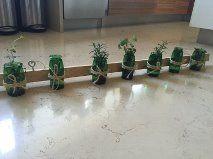 Nuestro proyecto constaba de un proceso de hidroponía que le llaman cama flotante. En la hidroponía existen 2 variantes la A y la B, nosotras realizamos la B ya que la A requiere de electricidad pero si se te va la luz se pueden morir las plantas.