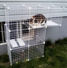 Outdoor Cat Cages | Build A Do-It-Yourself Outdoor Cat Enclosure ... | I will do this som ...