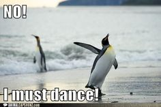 Funny Animal Captions - NO!  I must dance!
