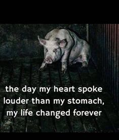 Animals should not have to go through pain so we can be happy. Animals need to. - Animals should not have to go through pain so we can be happy… Animals need to be treated with re - Vegan Facts, Vegan Memes, Vegan Quotes, Vegetarian Quotes, Amazing Animals, Animal Activist, Why Vegan, Vegan Animals, Vegan For The Animals
