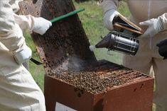 How to Make a Homemade Bee Smoker - BeeKeepClub - How to Make a Homemade Bee Smoker: DIY Beekeeping - How To Start Beekeeping, Beekeeping For Beginners, Bee Hive Stand, Bee Smoker, Bee Suit, Raising Bees, Bee Farm, Bee Keeping, Queen Bees