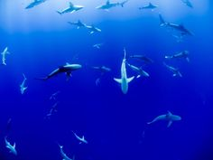 Cool sharks you may not know. These cool shark species give use some great reasons to protect our ocean and the biodiversity it holds. Cool Sharks, Vancouver Aquarium, Shark Photos, Especie Animal, Shark Fin, Lake Photos, Great White Shark, California Coast, Fishing Girls