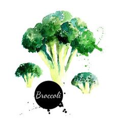 Broccoli. Hand drawn watercolor painting on white backgroundŒ