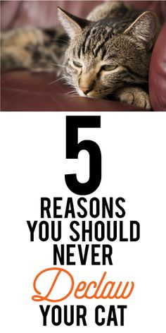 5 Reasons You Should Never Declaw Your Cat