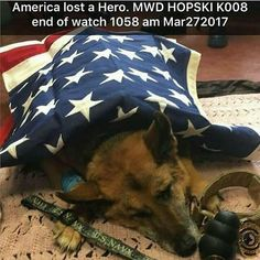 Literally my favorite breed as an army dog just had to die on my birthday?!?! REALLY!?!?!?