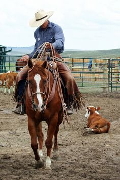 2008 Ranch/Arena Horse for Sale - For more information click on the image or see ad # 63093 on www.RanchWorldAds.com