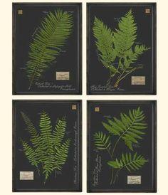 Fern Botanical Prints.