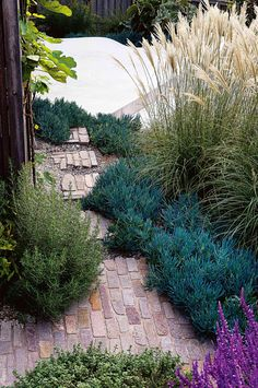 Garden by the sea - project by Michael Cooke Garden Design. Photography by Brigid Arnott.