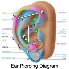 Le plus à jour Absolument gratuit Piercing transversal Concepts, tragus antitragus conch inner upper outer daith forward helix industrial lobe orbital ragnar rook snug stretched transversal vertical. How To Balance Ear Piercings Ear Piercing Diagram, Ear Piercings Chart, Cute Ear Piercings, Ear Diagram, Cool Peircings, Unique Body Piercings, Monroe Piercings, Innenohr Piercing, Migraine Piercing