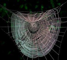 Gorgeous spider web