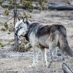 Help Stop The Wildlife-Killer Bill In Congress The anti-wildlife measures are catastrophic