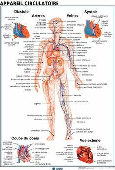 Posters sciences de la vie et de la Terre de Jeulin Plus