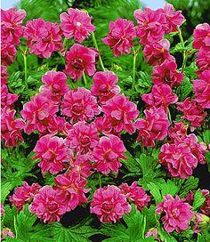 7 besten winterharte Pflanzen Bilder auf Pinterest | Flowers ...