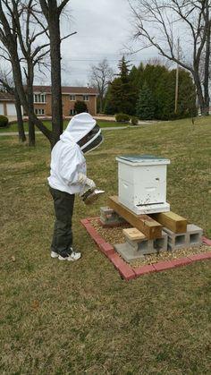 Keeping Backyard Beehives - Backyard Beekeeping For ...
