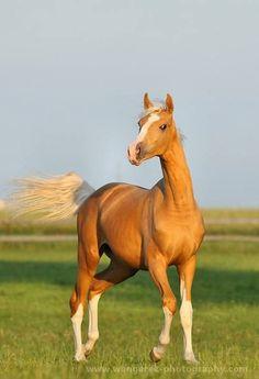 Horse / beauty - soure:Animal Fun