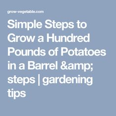 Simple Steps to Grow a Hundred Pounds of Potatoes in a Barrel & steps | gardening tips