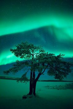 The lights in the night sky are divinity in motion. We are blessed to see them.  Northern Lights || Finnish Lapland