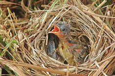 Damon Calderwood - Lonely in the nest Jesus Wallpaper, Bird Nests, Damon, Lonely, Birds, Bird, Loneliness
