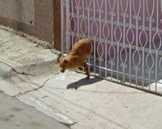 StreetViewFunny_dog